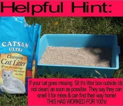 Cat Not Using Litter Box After Declaw